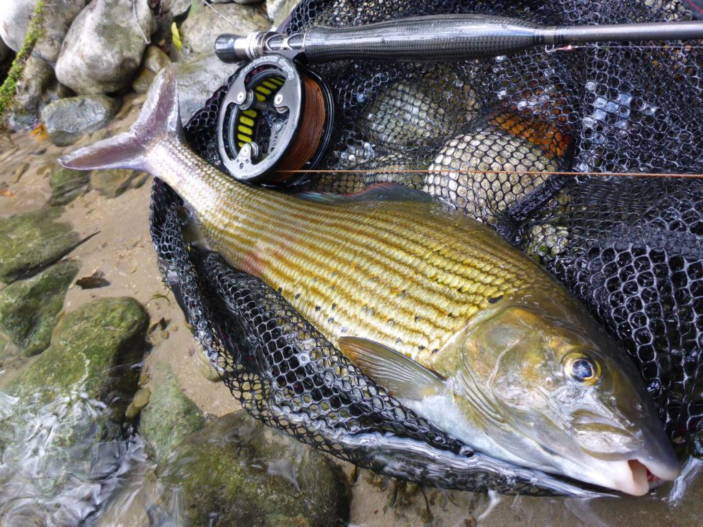 Ombre pêché à la mouche sur la rivière Una lors d'un voyage pêche mouche en Bosnie